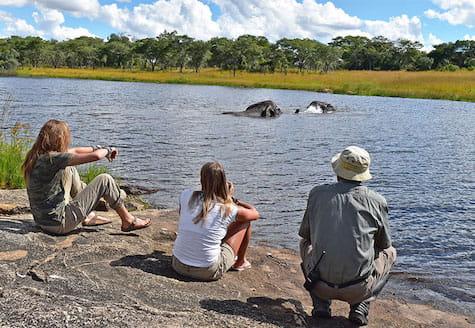 Volunteers watching elephants swimming in Zimbabwe