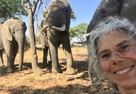 Mature volunteer with three elephants in the background