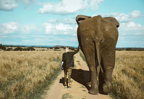 Girl walking next to elephant touching his side
