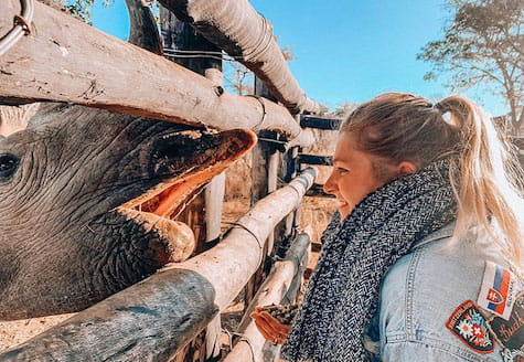 Girl volunteer feeding black rhino from inside a feeding pen in Zimbabwe