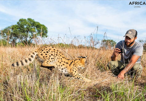 Man taking a photo of a serval cat in Zimbabwe