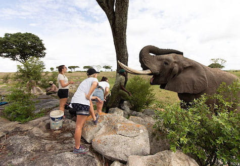People feeding African elephant from on top of a rock