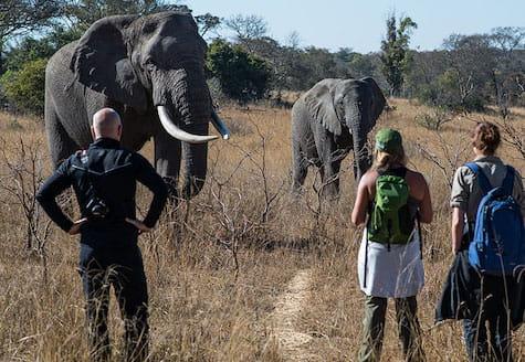 Two volunteers watching elephants close up