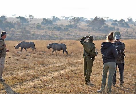 Wildlife volunteers learning how to track rhinos using radio telemetry