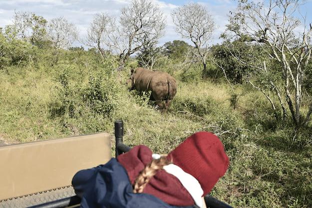 Volunteer looking at rhino