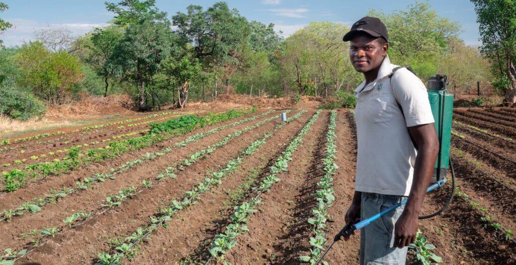 Community member working in vegetable garden in Zimbabwe