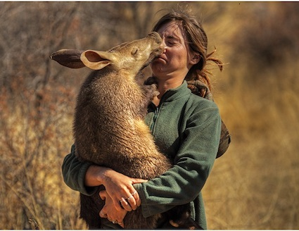 Aardvark rescue in Namibia