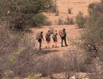 Hiking in the bush