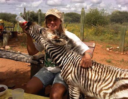 Volunteer in Namibia feeding orphaned xebra