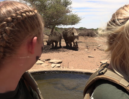 Volunteers with rhino in Namibia