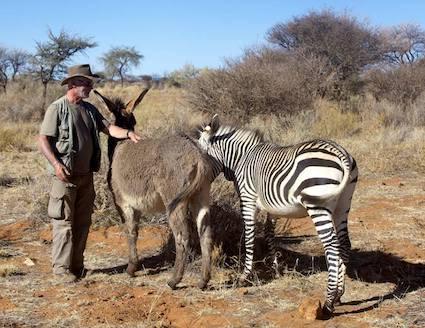 wildlife sanctuary volunteer with donkey and zebra