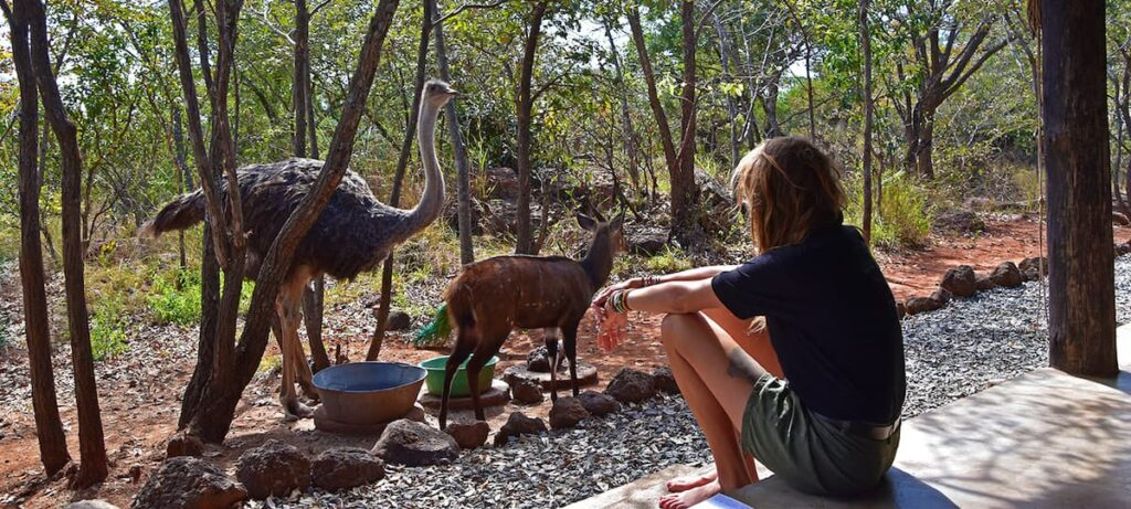 Girl with animals at sanctuary in Africa