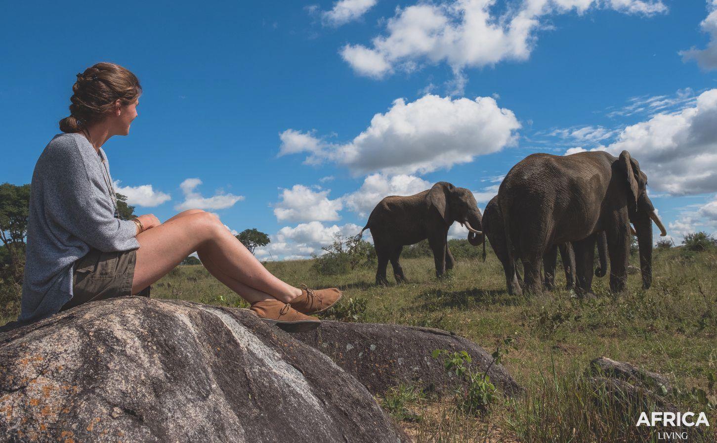 Volunteer with elephants in Africa